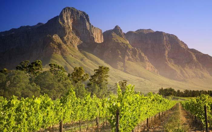 Wijnroute Stellenbosch