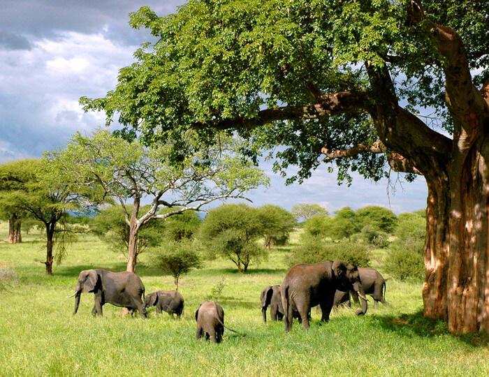 Olifanten Gezinnetje