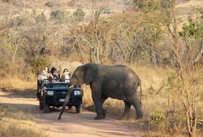 safari olifanten omsingeling