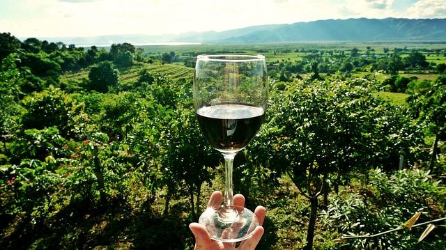 Zuid-Afrikaanse wijn met uitzicht